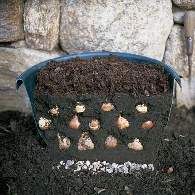 planter with layers of spring bulbs to bloom in fall