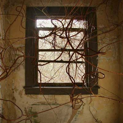 vines growing around window in abandoned home near Mississippi River