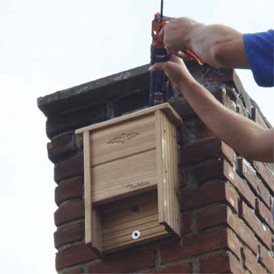 installing a bat house can give returning bats a house-safe location for them to roost