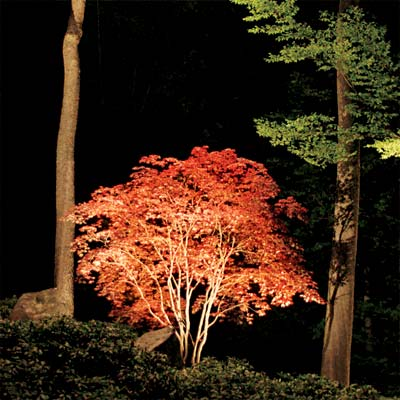 standout trees example of exterior landscape lighting