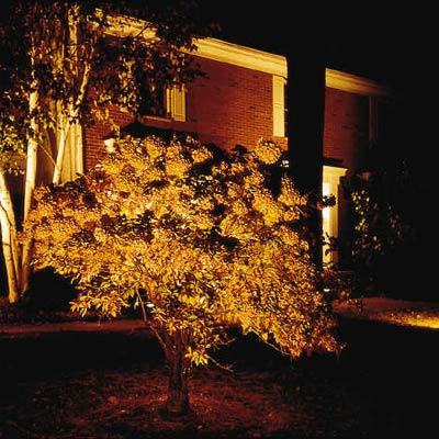 a front lawn tree illuminated by outdoor lights