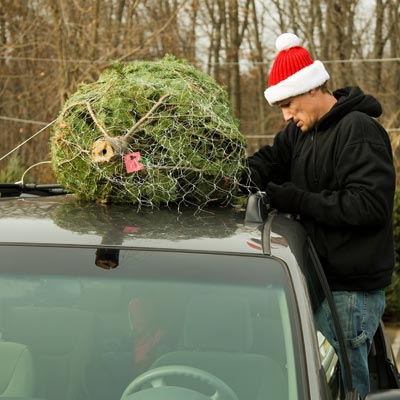 Tying tree to roof