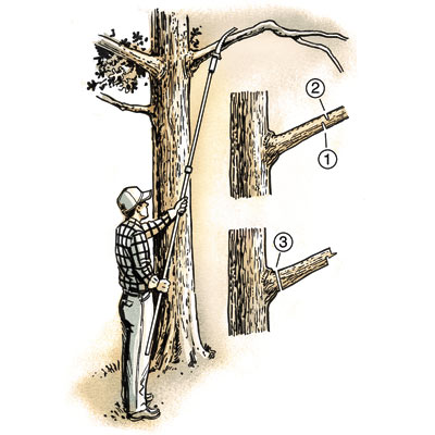 illustration of man limbing a tree