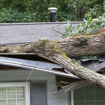 fallen tree limb on house roof