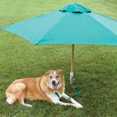Yard umbrella to shade pets