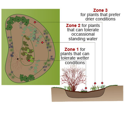 illustration showing the three planting zones in a rain garden for organizing  your plants