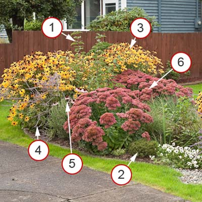 rain garden for flower lovers with plants notated