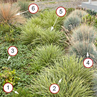 rain garden for playing and nibbling with plants notated