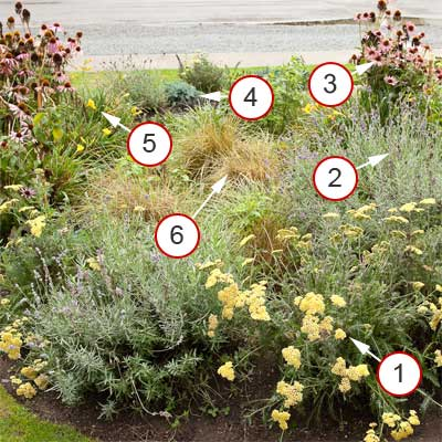 perennial rain garden with plants notated