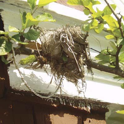 bird's nest on a tree