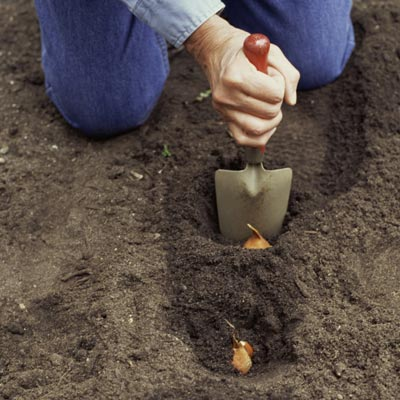 person kneeling in soil to plant bulbs