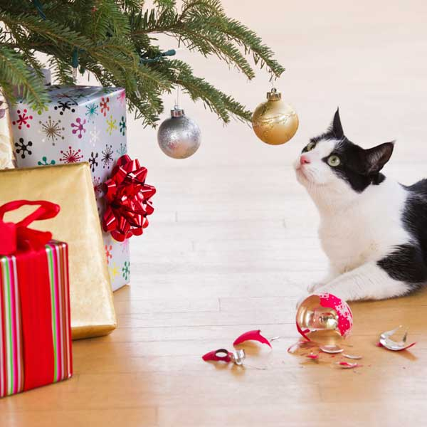 cat playing with Christmas tree ornaments