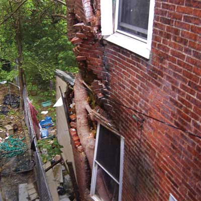 tree growing through the outer wall of a brick house from home inspection nightmares gallery twenty-seven