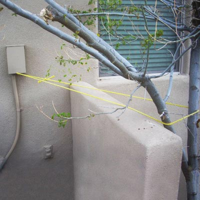 a tree tied to an electrical main