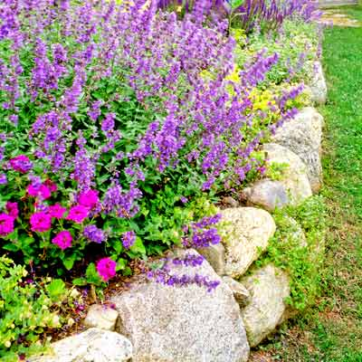 cottage garden with stone retaining wall and flower bed with catmint and salvia