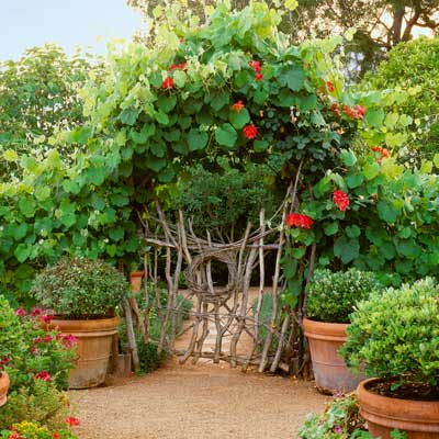 cottage garden with twig structure made into fence, garden gate and arch with climbing 'Joseph's Coat' roses