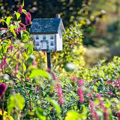 birdhouse with winterberry in bird garden in autumn garden