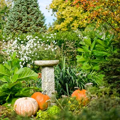 birdbath with pumpkins, yucca, Nicotiana sylvestris, Anemone 'Honorine Jobert' and blue Arizona fir in autumn garden