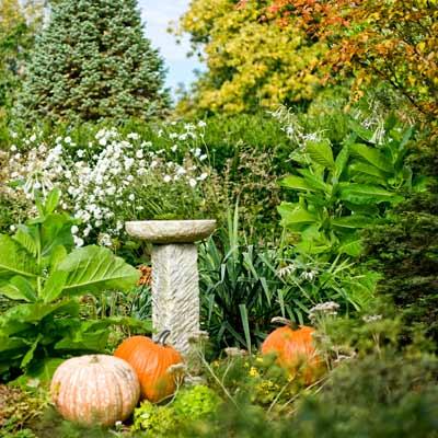 birdbath with pumpkins, yucca, Nicotiana sylvestris, Anemone 'Honorine Jobert' and blue Arizona fir in autumn garden