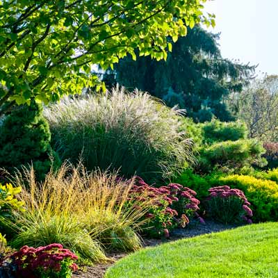 Conifers, ornamental grasses, and sedums form a border around autumn garden