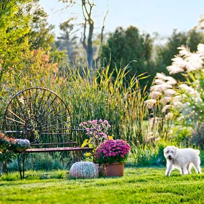 homeowner's dog walking by snail bench in wetland area with cattails, ornamental grasses, mums, autumn anemones, ornamental peppers in autumn garden