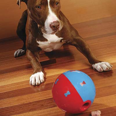 treat ball is a dog toy