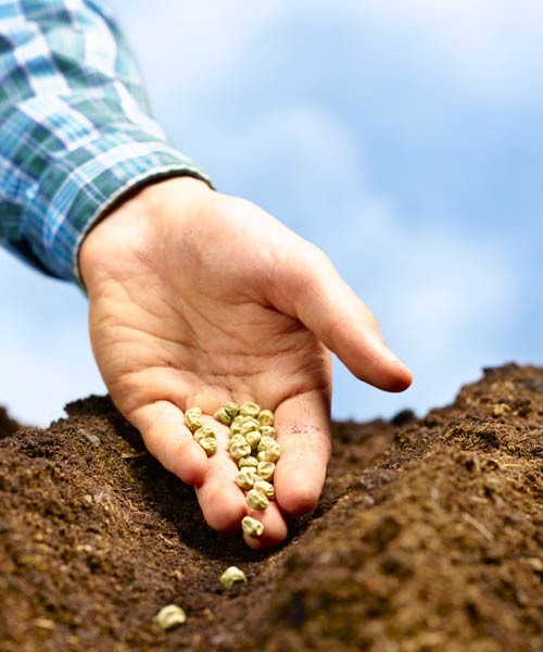 10 uses for sandpaper, planting pea seeds