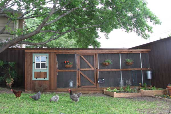 build a better chicken coop, coop positioned under a tree's canopy for better shade