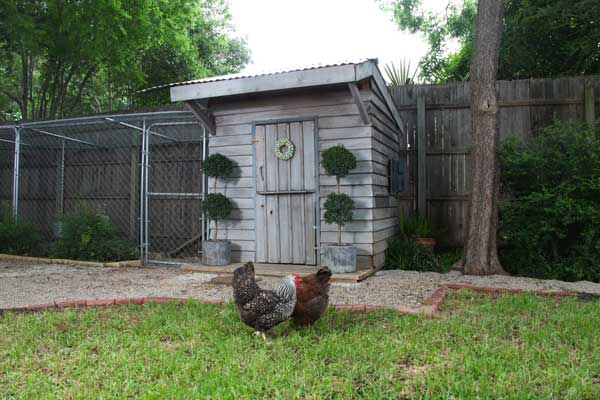 build a better chicken coop with converted playhouse turned chicken coop