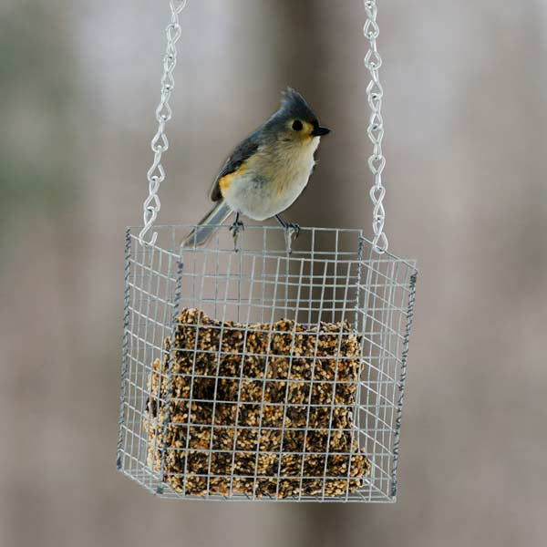 wire bird feeder with seed cakes, hardware cloth 10 uses