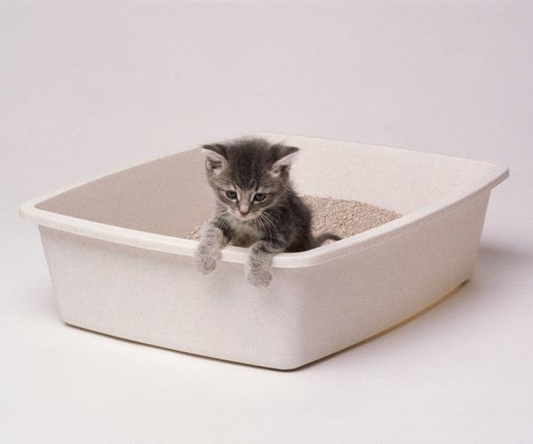 kitten using litter box, hardware cloth 10 uses