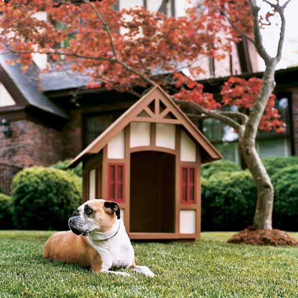 dog with tudor style doghouse