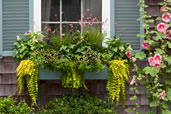 window box with flowers and plants