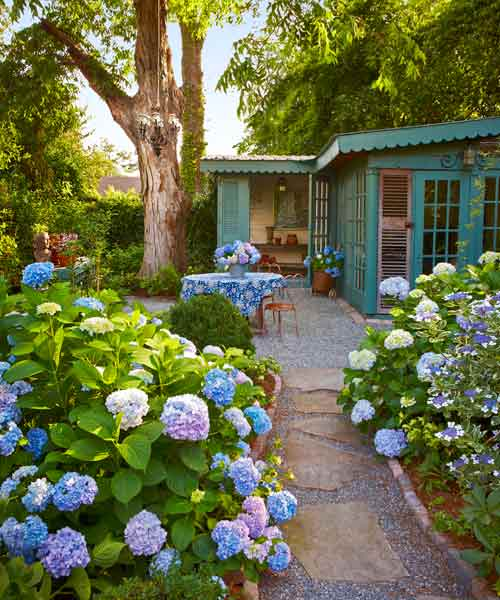 garden path lined with hydrangeas, all about hydrangeas
