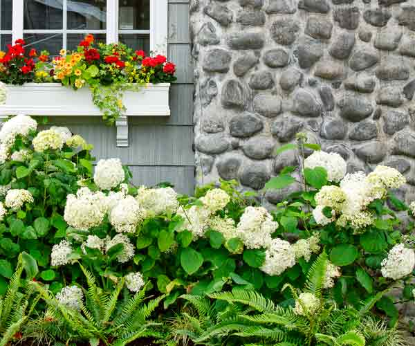 Companion Plantings All About Hydrangeas This Old House