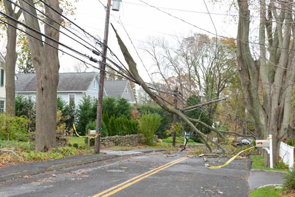tree fallen on power lines after storm, products for power outages