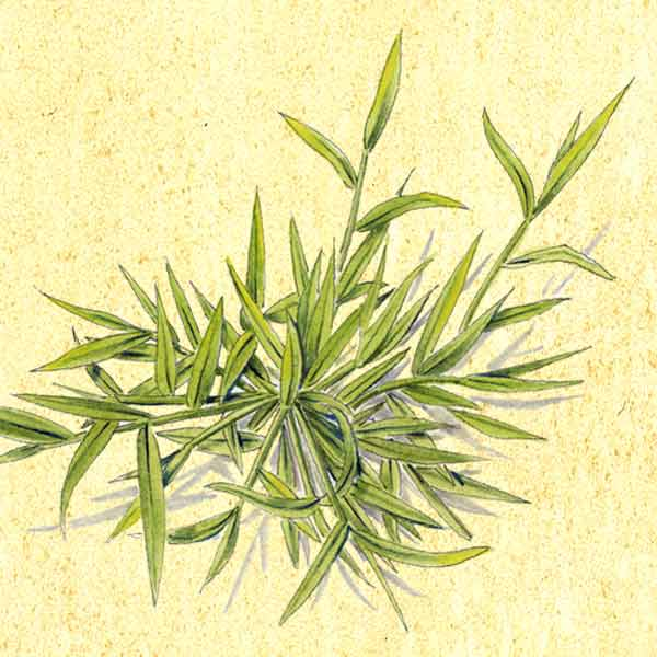 crabgrass illustration, weeds signs for bigger lawn problems
