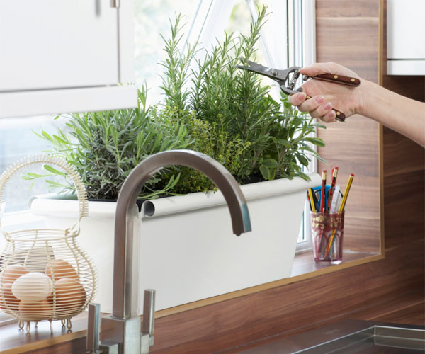 Kitchen Bench Herb Garden: A Hand Holding Snips Reaches Across A Stainless Steel