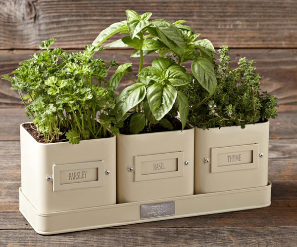 Herb Labels and Tray | Charming Planters for Kitchen Herb Gardens
