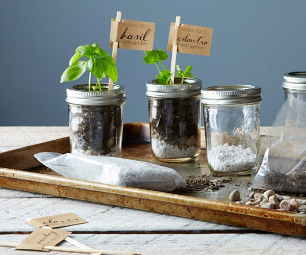 Kitchen Garden Kit: Four Small Bell Jars On A Metal Tray While The Bell Jars