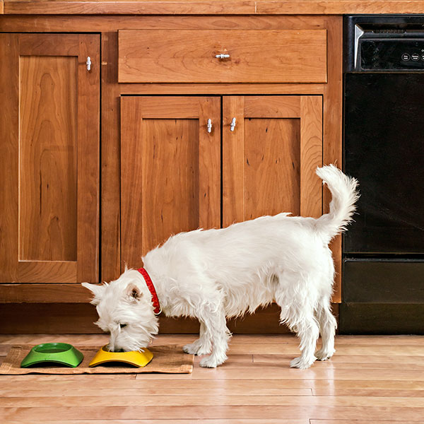 Dogs And Hardwood Floors: Flooring For Four-Legged Friends Of The Family