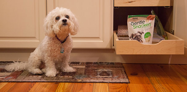 small dog next to pet supplies storage