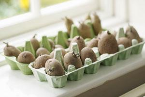 growing Irish potatoes in an egg carton