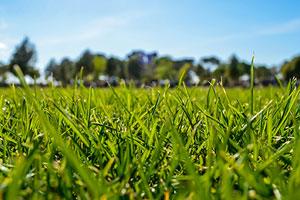 a lush, grassy yard