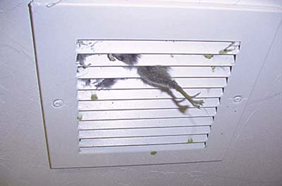 home inspection photo of dead animal in vent