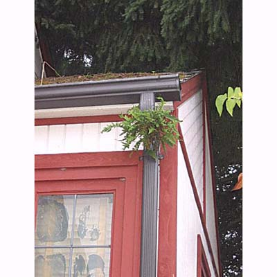 home inspection photo of sword fern growing in downspout