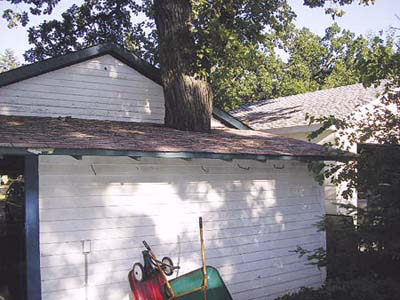 home inspection photo of tree growing through roof