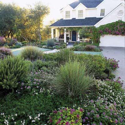 lawn-less garden