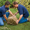 Men tying burlap sack around the bottom of the tree