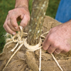 Man's hands tying twine around tree